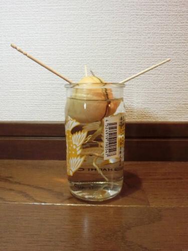 【アボカド栽培記録】190224