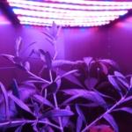 【DIY】植物育成用LEDを自作