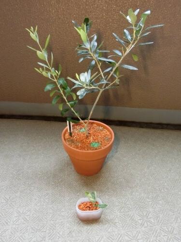 【オリーブ栽培記録】190818 剪定&挿し木開始