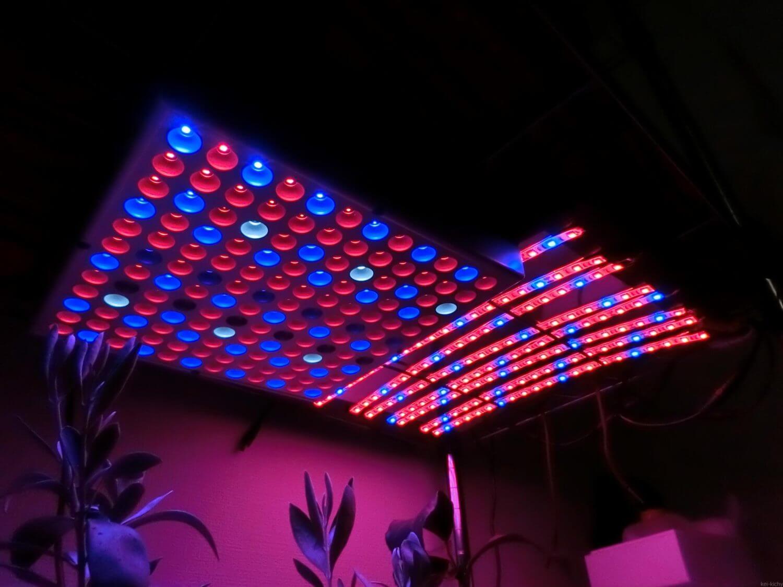 LED育成ライト